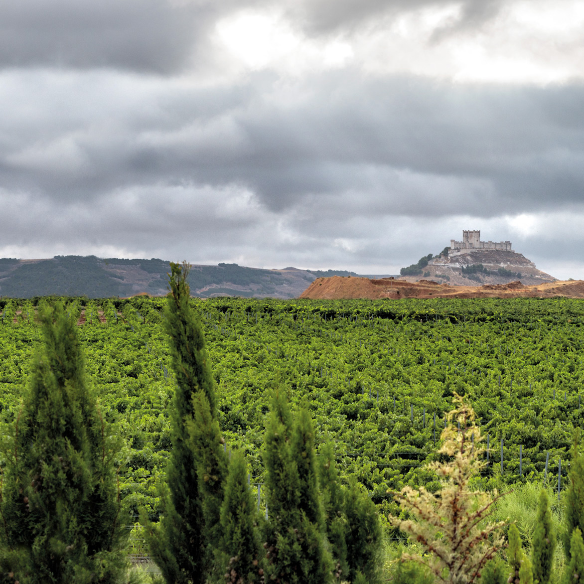 Vineyards of Peñafiel